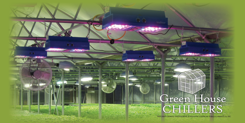 greenhousechiller-lighting-14